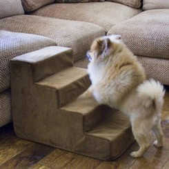 L.A. Dog Pup Stairs