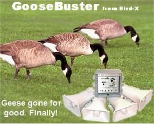Bird-X GB GooseBuster