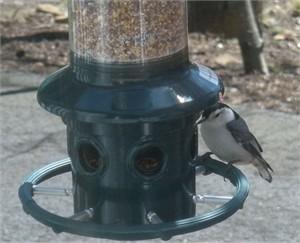 Brome 1024 Squirrel Buster Plus Bird Feeder